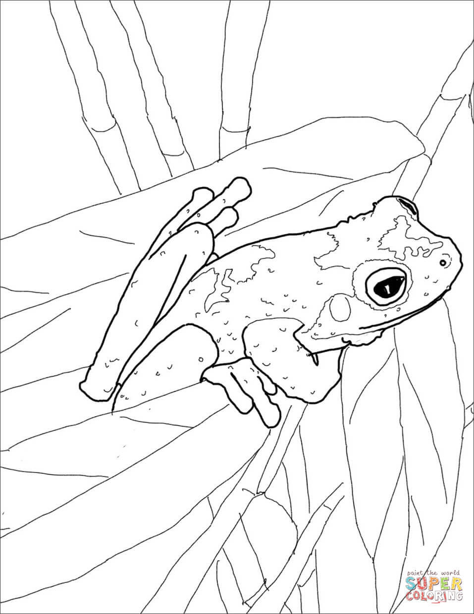 green tree frog coloring page tree frog coloring page free printable coloring pages coloring frog tree page green