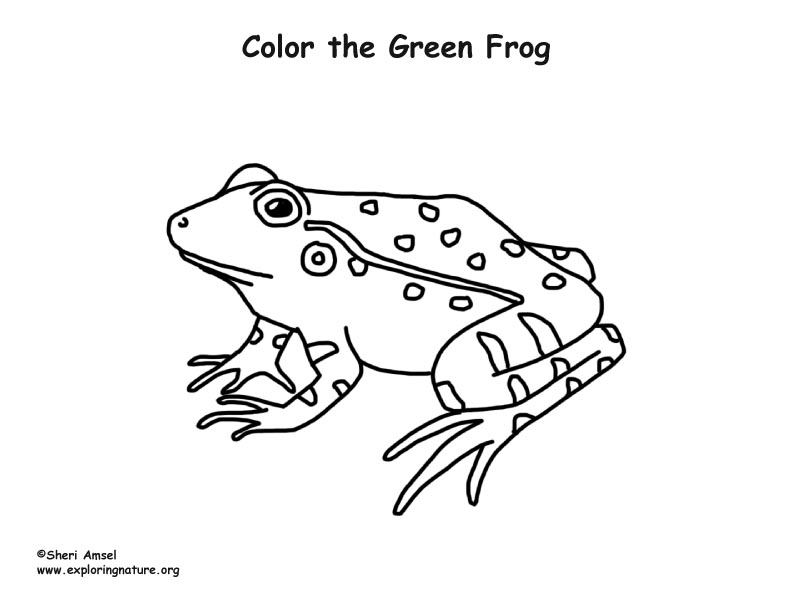 green tree frog coloring page tree frog coloring pages green trees tree frogs green tree page frog coloring