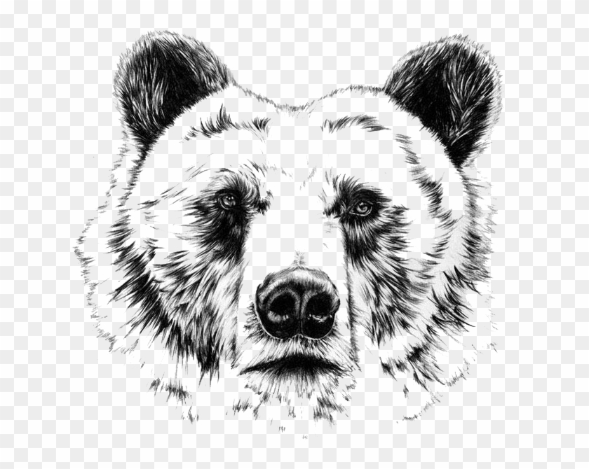 grizzly bear drawings amazing pencil drawings view our worlds grizzly drawings bear