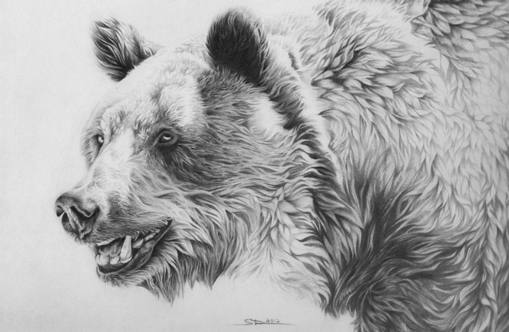 grizzly bear drawings angry grizzly bear drawing by mehran yousefian by grizzly drawings bear
