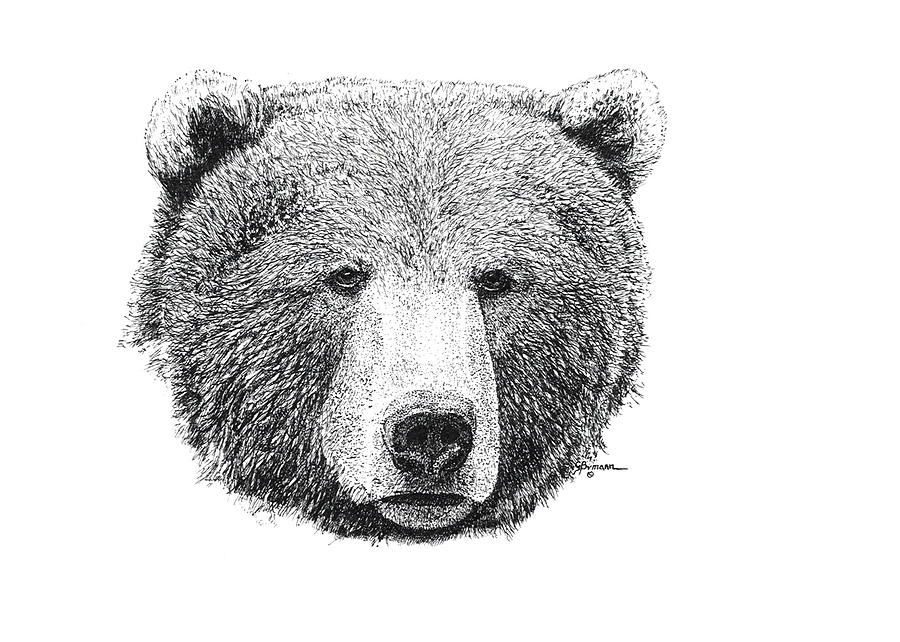 grizzly bear drawings dynamic realism original drawing of a grizzly bear bear drawings grizzly