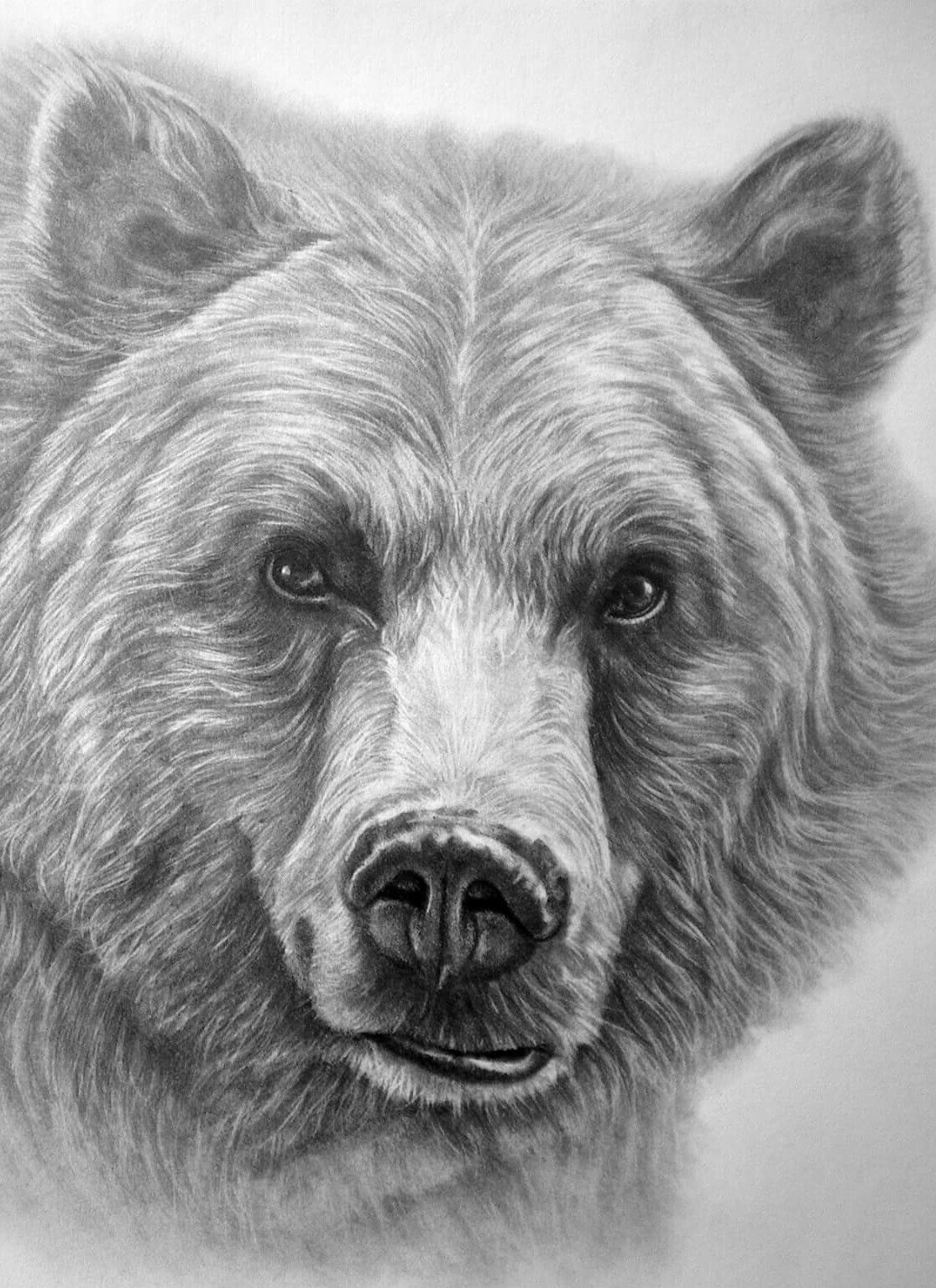 grizzly bear drawings easy drawing ideas step by step drawings bear grizzly