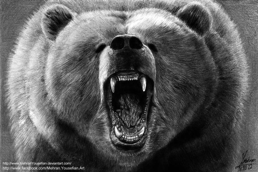 grizzly bear drawings grizzly bear by mohamed ziou by moziou on deviantart bear drawings grizzly