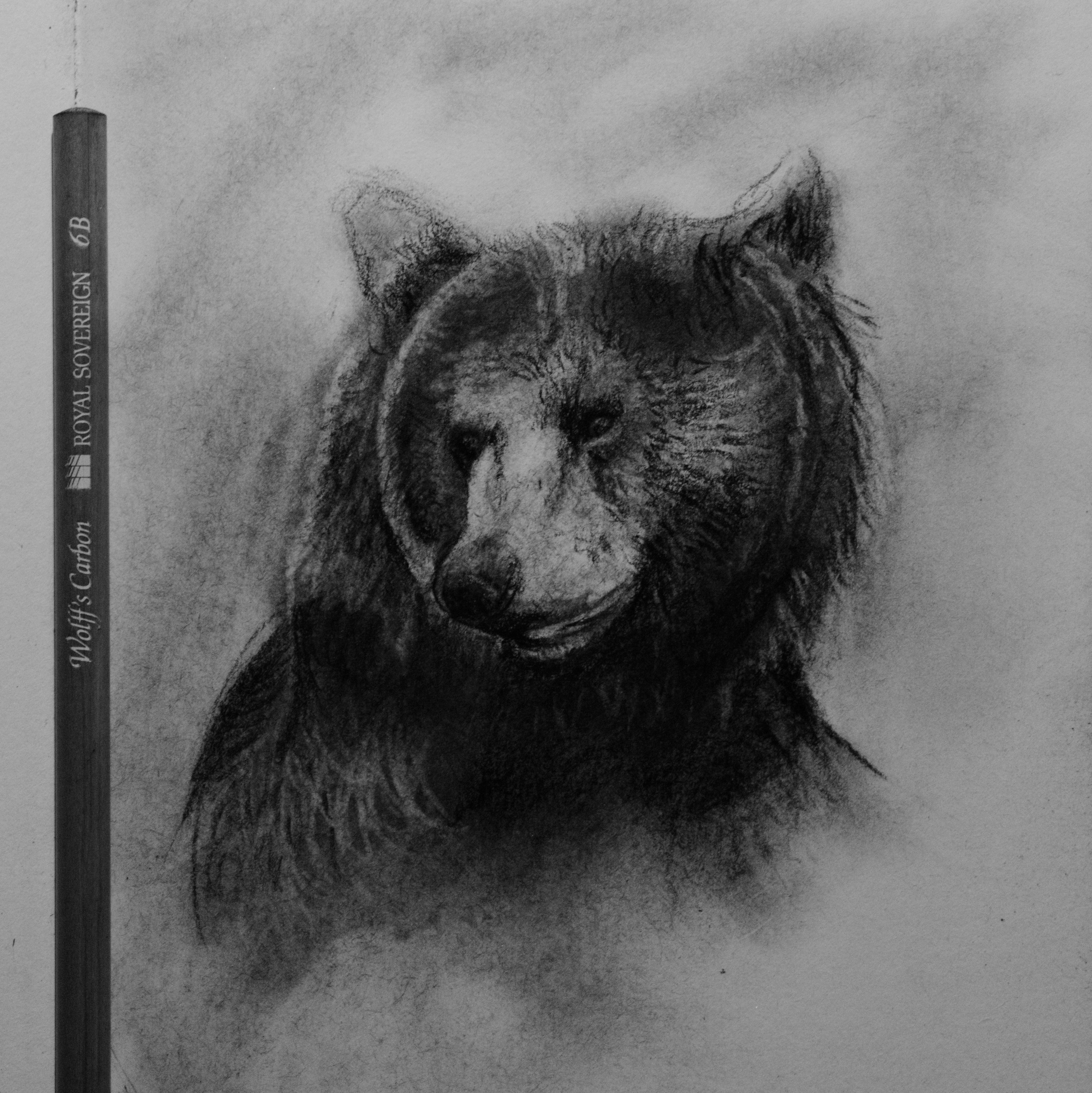 grizzly bear drawings grizzly bear by naviira on deviantart drawings bear grizzly