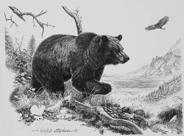 grizzly bear drawings grizzly bear pencil drawing art print a3 a4 sizes bear grizzly drawings