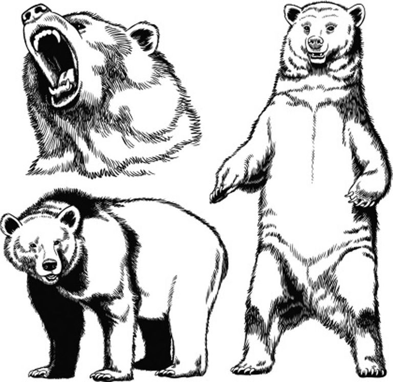 grizzly bear drawings grizzly bear pencil drawing at paintingvalleycom grizzly bear drawings