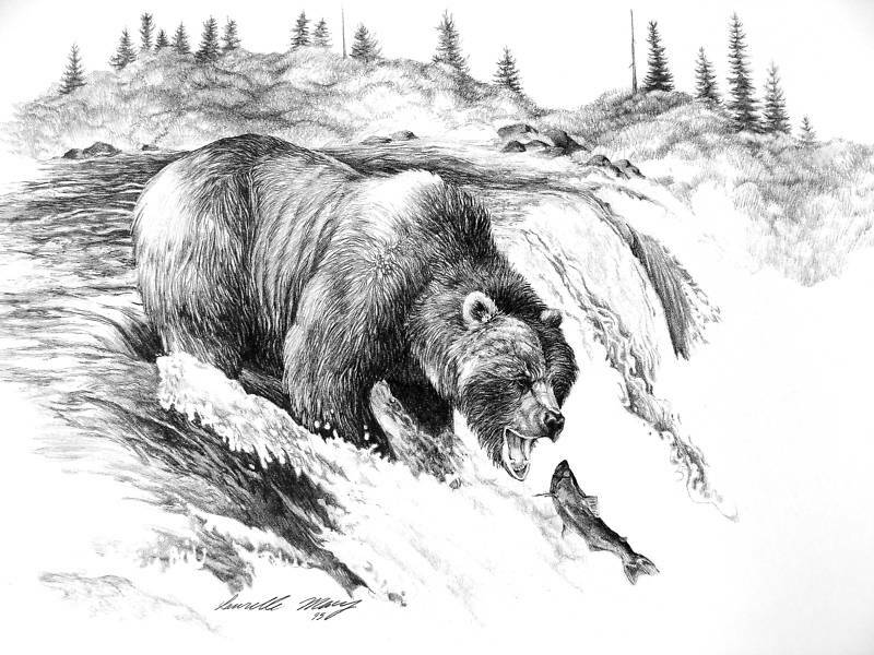 grizzly bear drawings sketch of the day grizzly bear drawings grizzly bear