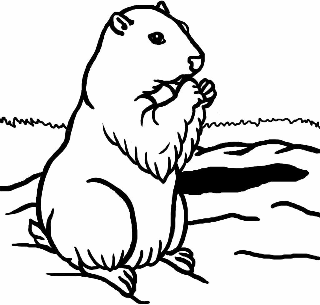 groundhog coloring page 17 best images about groundhogday on pinterest mini page groundhog coloring