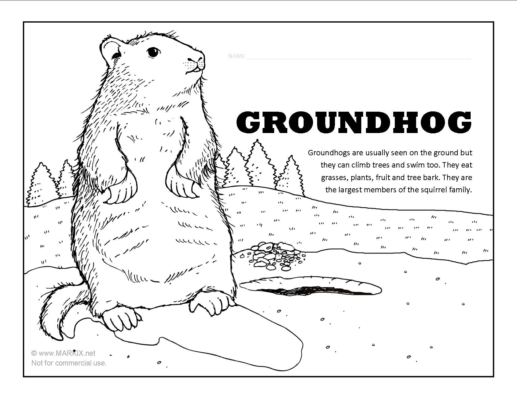 groundhog coloring page happy groundhog day coloring page twisty noodle page coloring groundhog