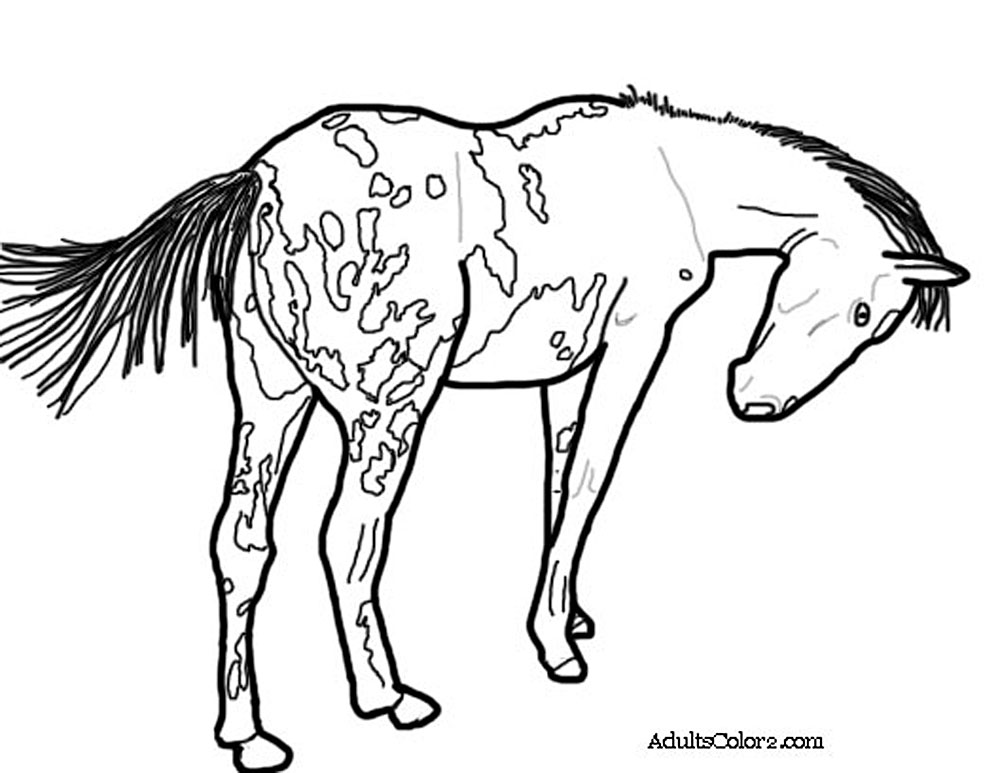 gypsy vanner horse coloring pages gypsy vanner coloring pages at getcoloringscom free vanner gypsy pages horse coloring