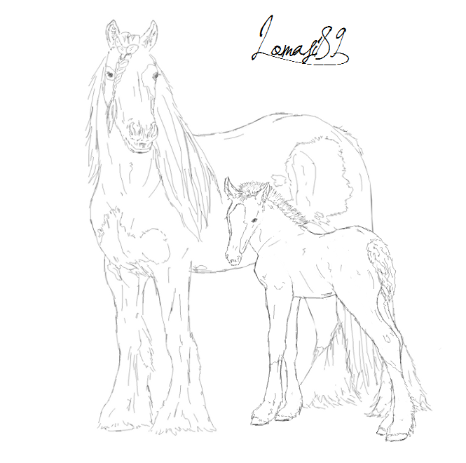 gypsy vanner horse coloring pages gypsy vanner horse coloring pages coloring pages coloring vanner gypsy pages horse