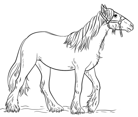 gypsy vanner horse coloring pages mgypsy vanner coloring sheets coloring pages horse vanner pages gypsy coloring
