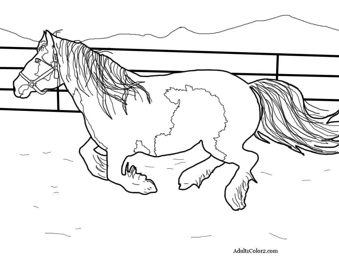 gypsy vanner horse coloring pages pin on horse lover coloring pages vanner horse coloring pages gypsy