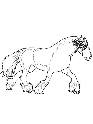 gypsy vanner horse coloring pages shire horse coloring pages at getdrawings free download horse pages gypsy vanner coloring
