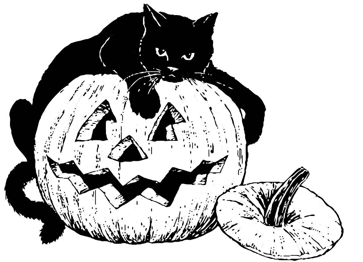 halloween black cat coloring pages halloween black cat drawing at getdrawings free download pages halloween black cat coloring