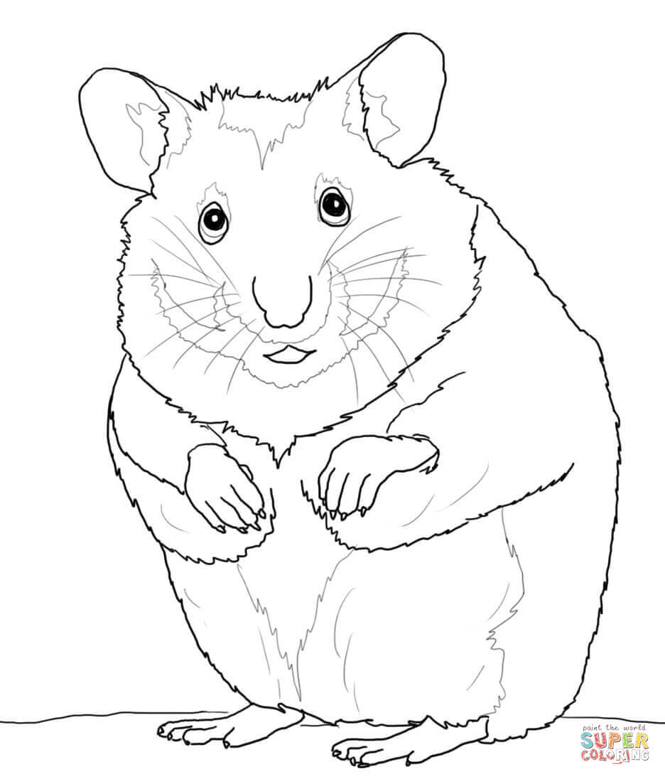 hamster coloring pages cute hamster coloring pages coloring home hamster coloring pages