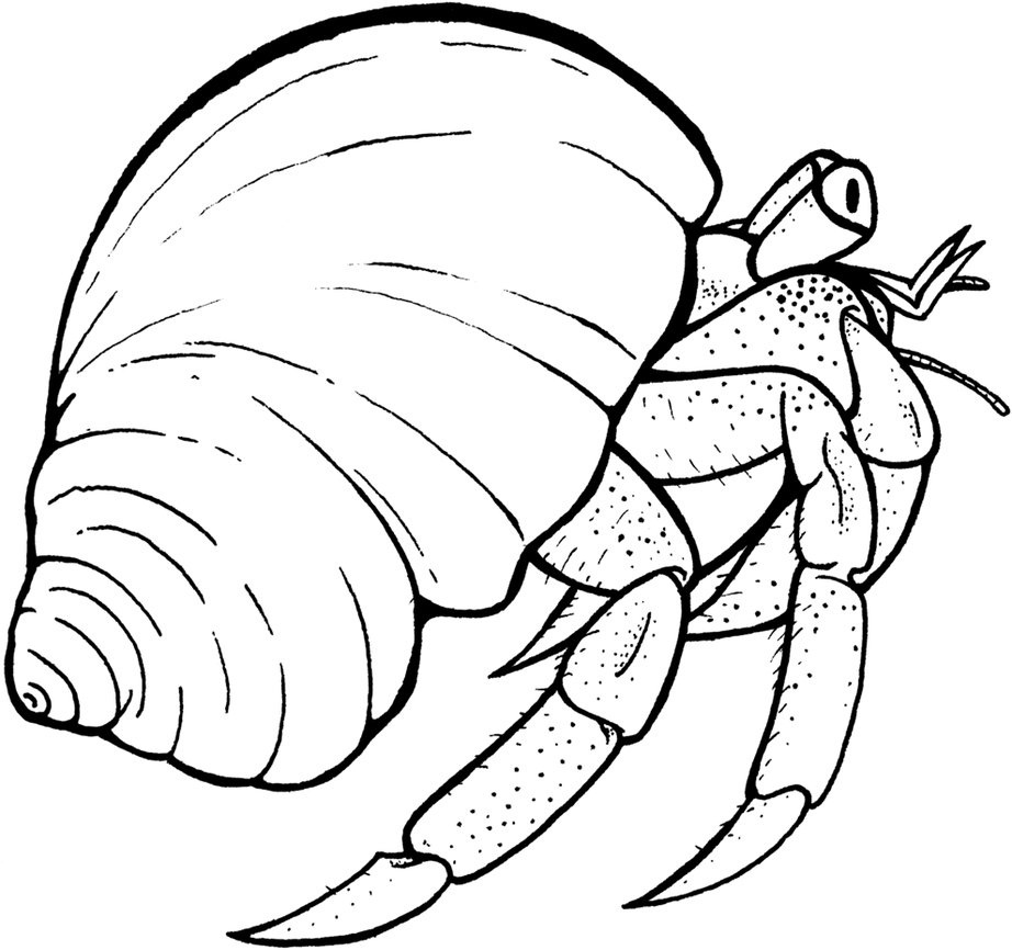 hermit crab coloring page printable hermit crab coloring pages for kids cool2bkids hermit crab page coloring
