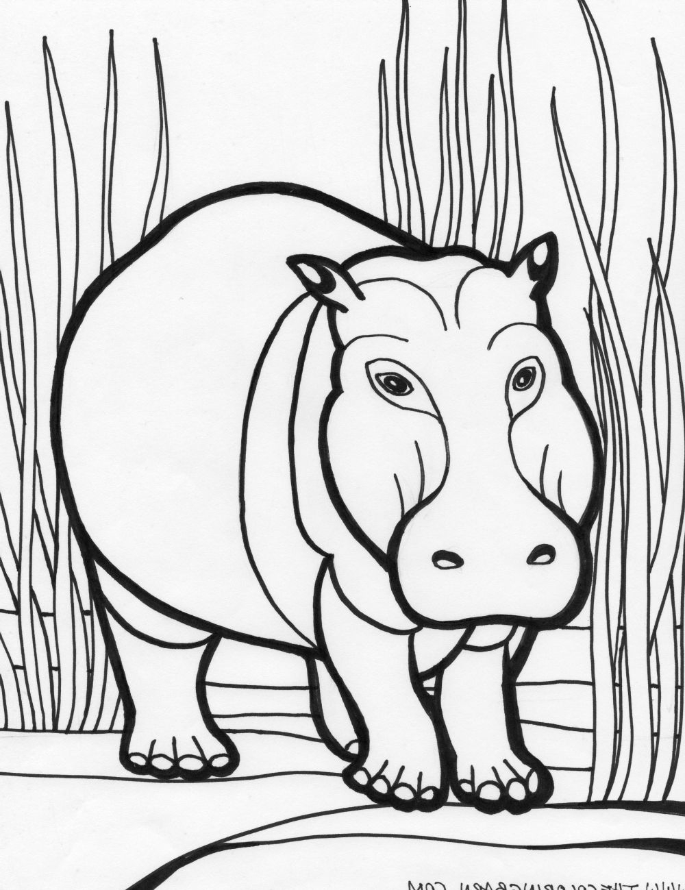 hippo coloring cute hippo coloring pages to kids hippo coloring