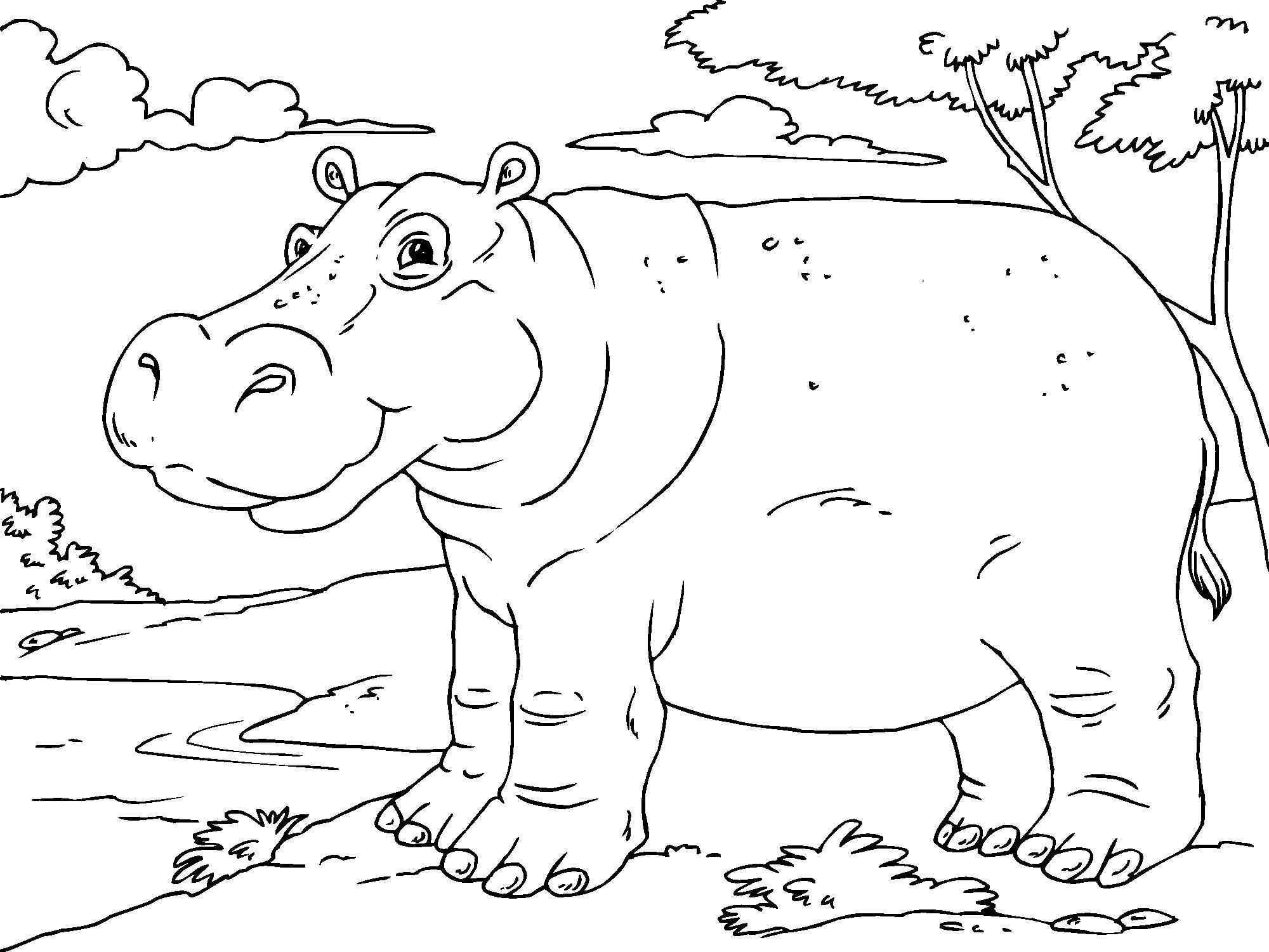 hippo coloring hippo coloring pages part 3 coloring hippo