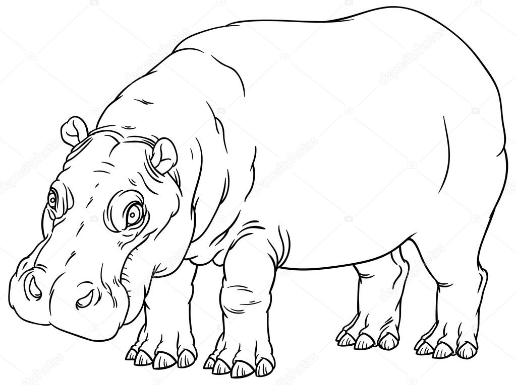 hippo outline drawing hippo drawing step by step at getdrawings free download hippo drawing outline