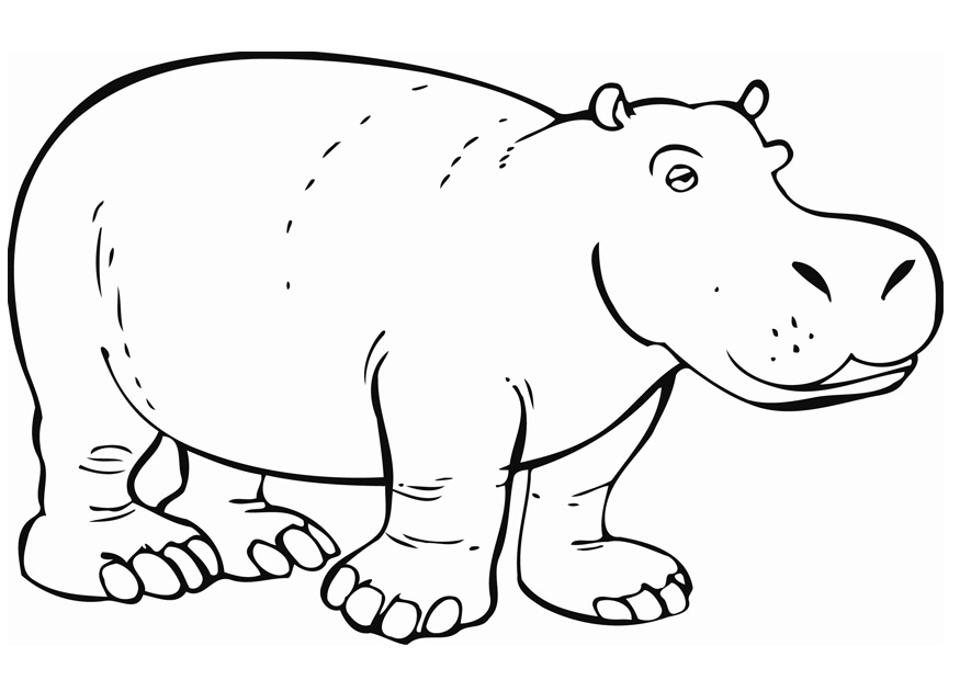 hippo outline drawing hippo line drawing free download on clipartmag outline drawing hippo