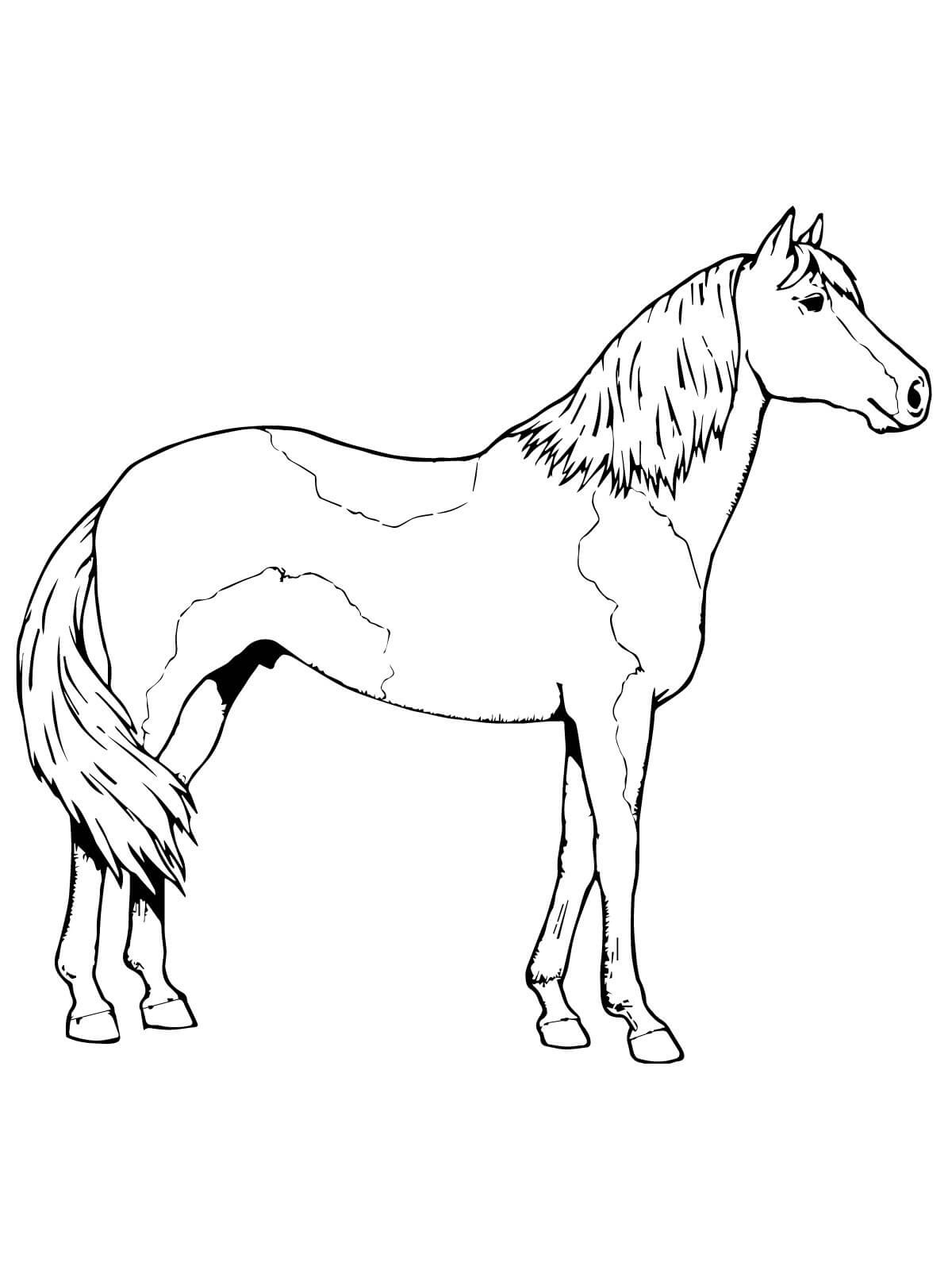 horse coloring pages for kids horse free to color for children trotting horse horses for coloring kids pages horse