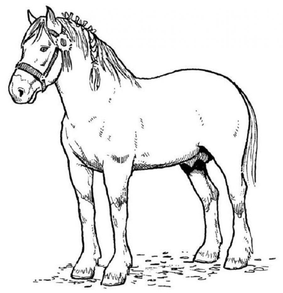 horse pics to color horse coloring pages for kids coloring pages for kids color horse to pics