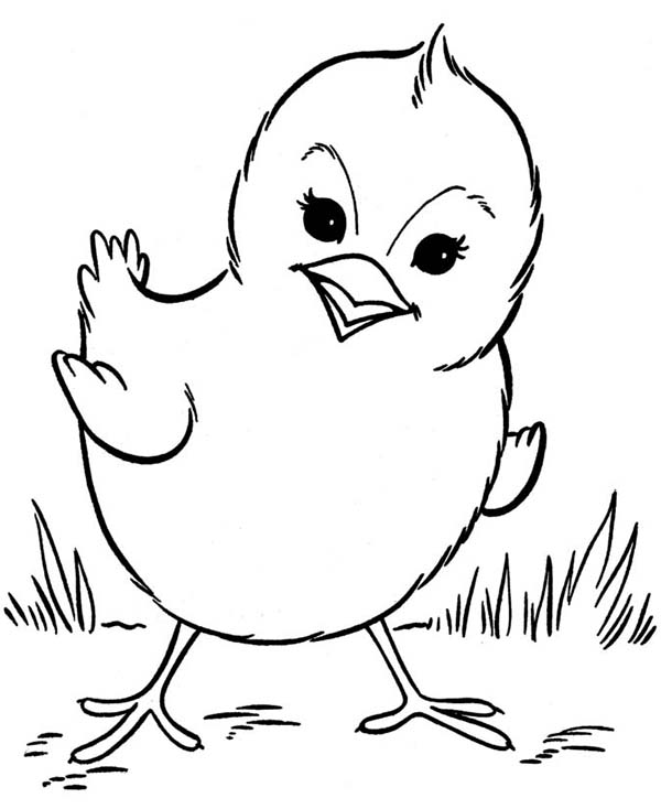 how to draw a baby chick baby chick drawing at getdrawings free download draw baby to chick how a