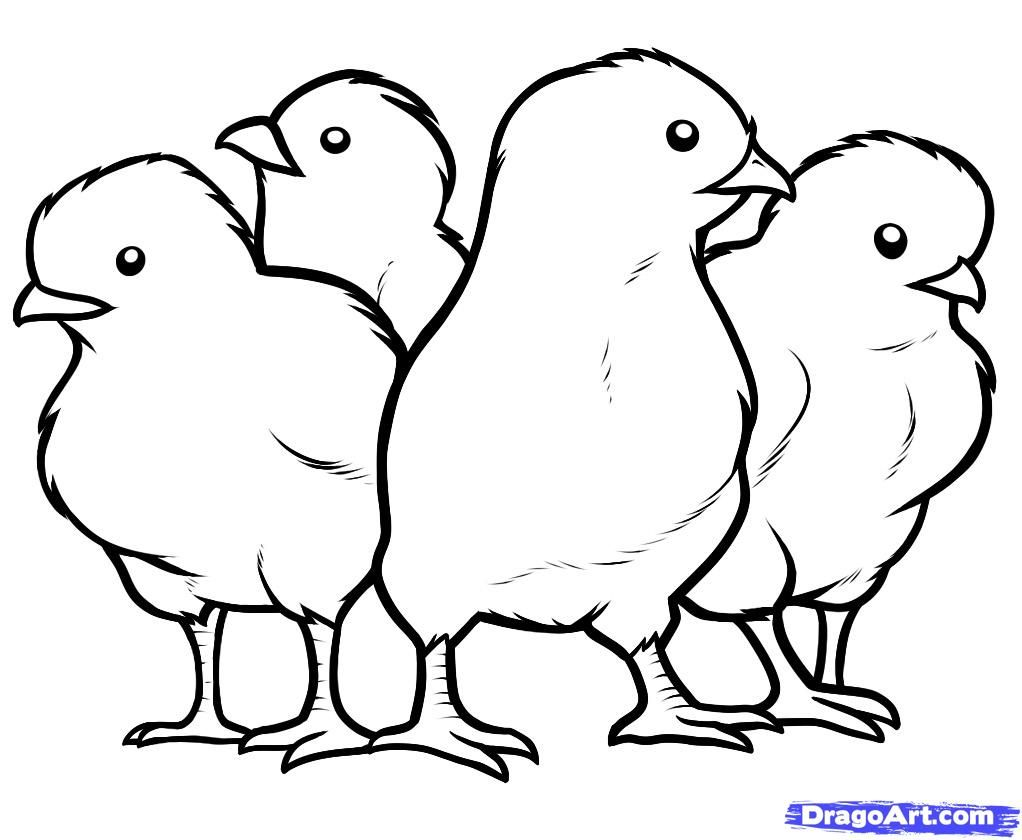 how to draw a baby chick baby chicks drawing at getdrawings free download a draw how baby chick to