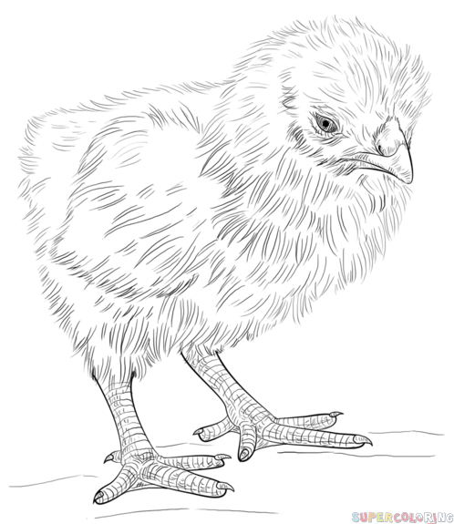 how to draw a baby chick pin on artsy fartsy how chick to a draw baby