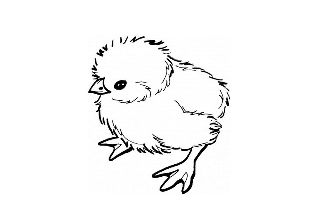 how to draw a baby chick pin on clipart baby chick how a to draw