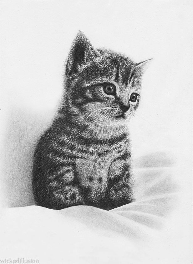 how to draw a baby kitten 29 pencil drawings art ideas design trends premium baby how draw kitten a to