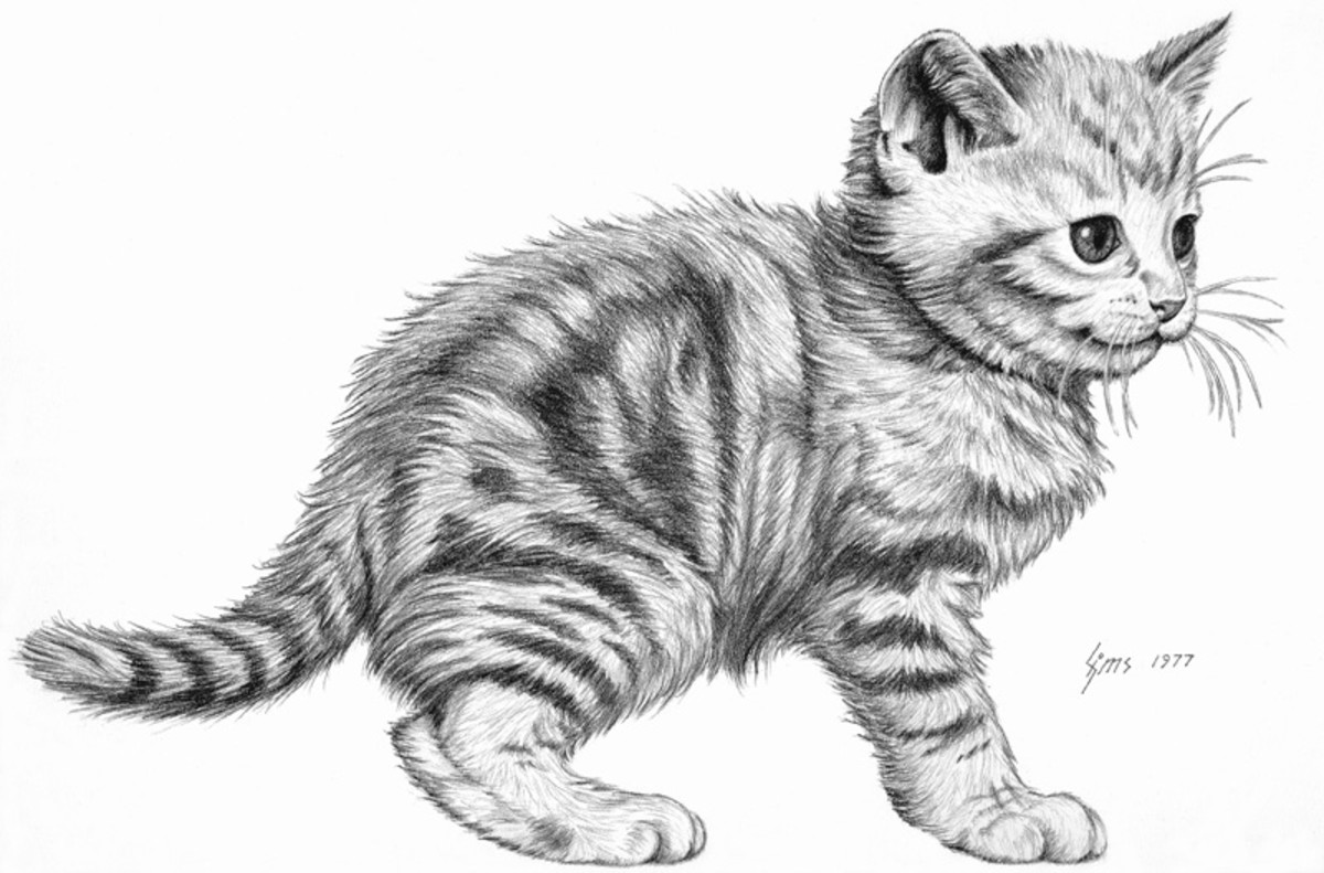 how to draw a baby kitten animal drawings draw kitten to baby a how