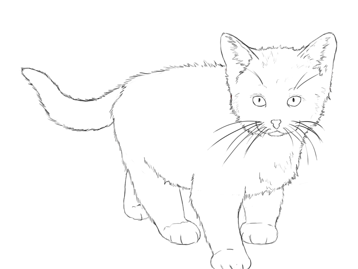 how to draw a baby kitten cute chibi cat drawing kawaii desenhos fofos desenhos draw kitten baby a to how