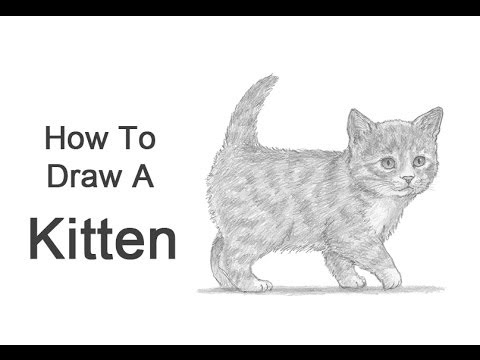 how to draw a baby kitten cute kitten in basket of shamrock coloring page free kitten baby a to how draw