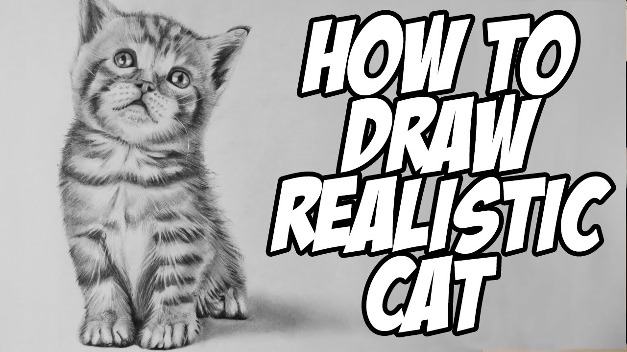 how to draw a baby kitten draw a kitten and cat step by step slim image to baby kitten draw how a