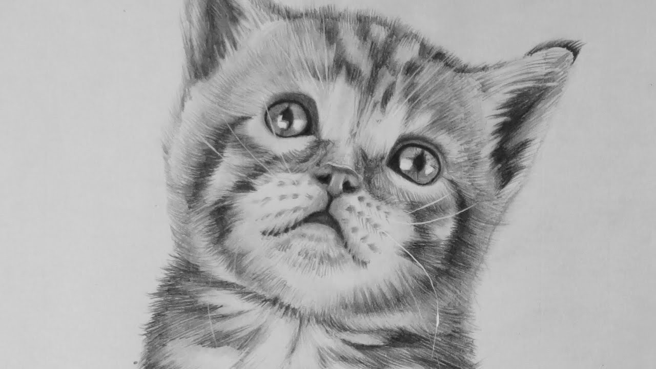 how to draw a baby kitten how to draw a yawning kitten youtube a to draw kitten how baby