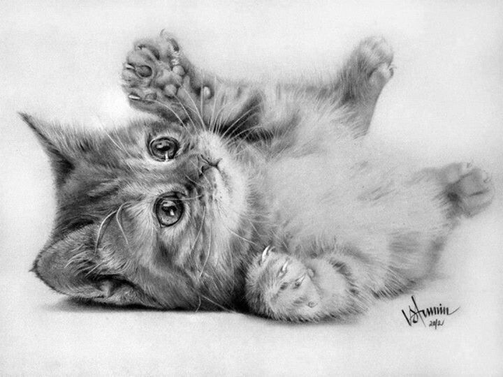 how to draw a baby kitten how to draw baby kittens baby kittens step by step pets kitten baby a how draw to