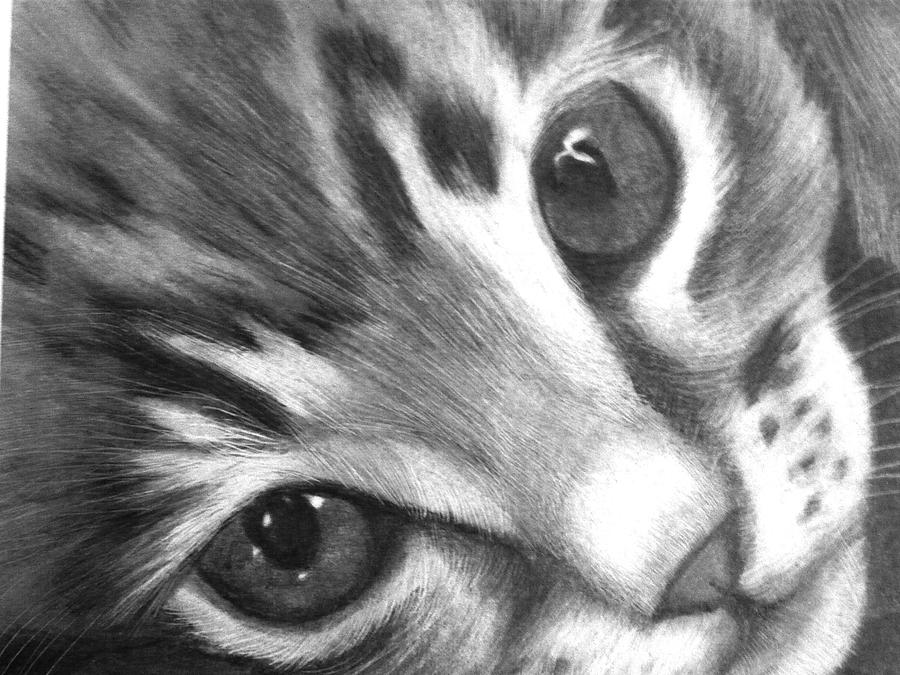 how to draw a baby kitten how to draw cute kitten cats and kittens how to baby a draw kitten