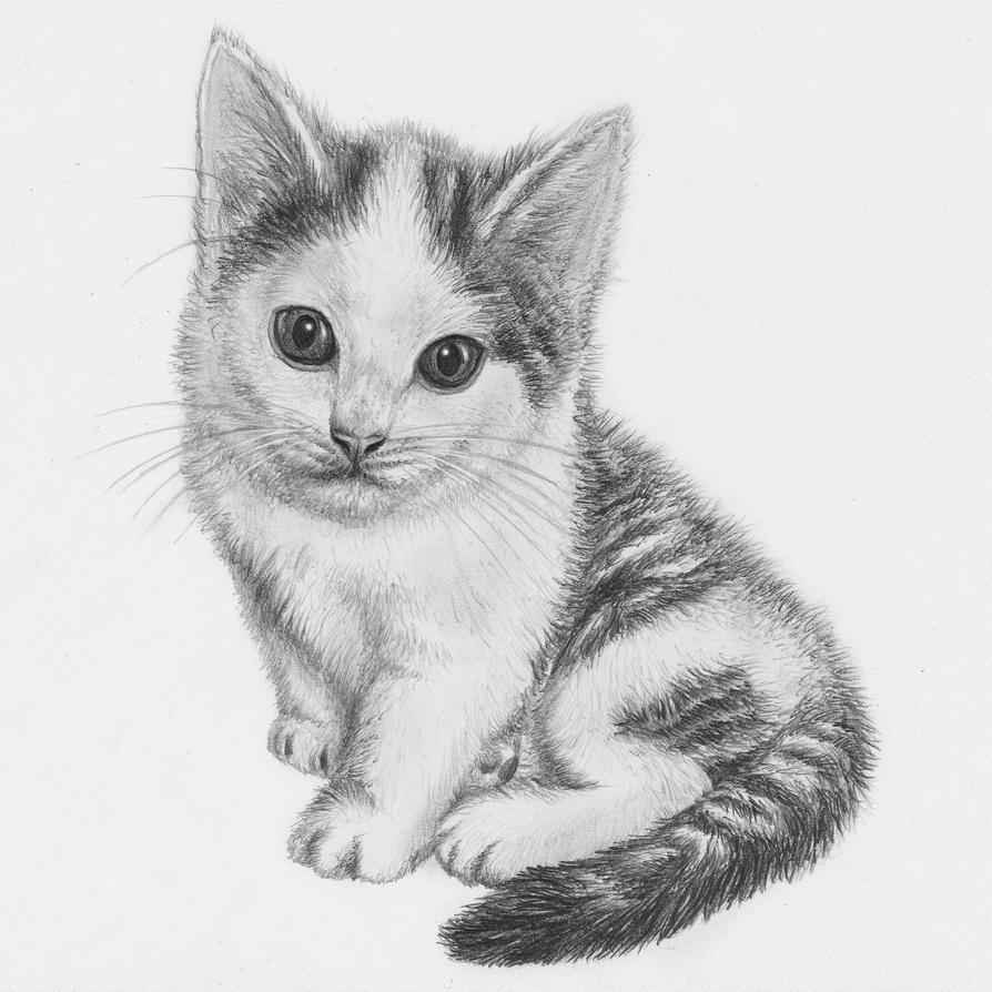 how to draw a baby kitten kitten drawing by jeroenpaint on deviantart how a baby kitten to draw