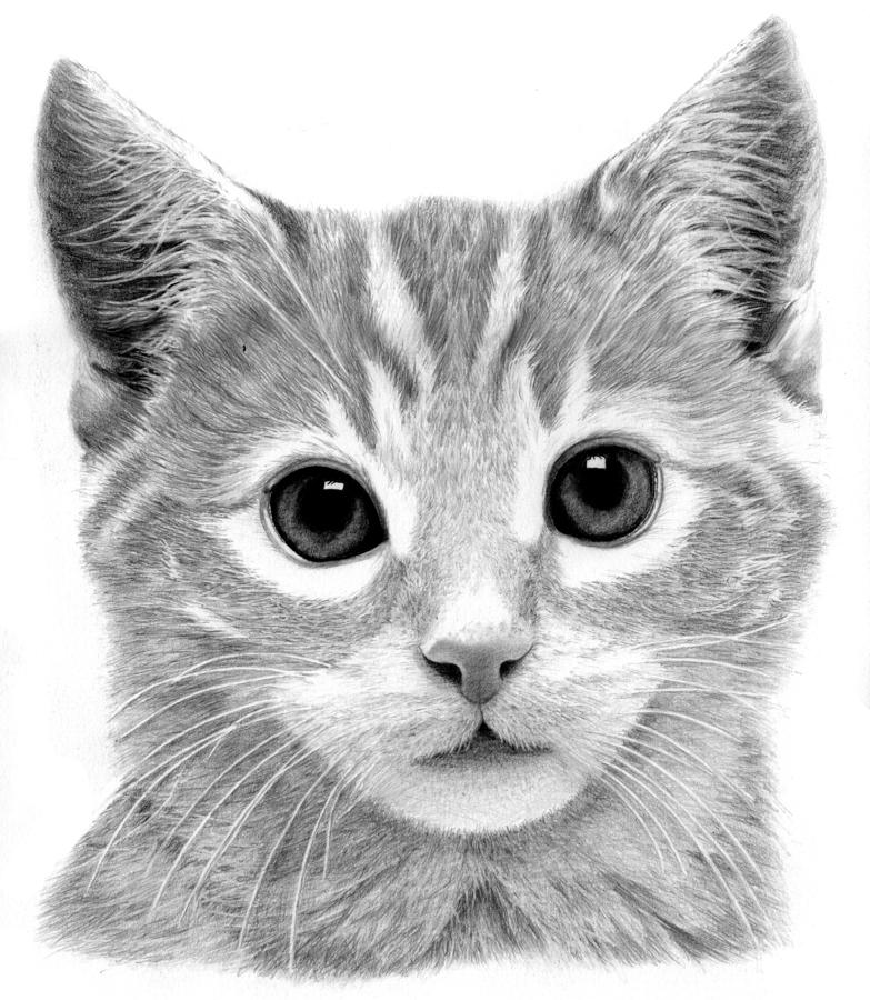 how to draw a baby kitten playful baby cat drawing by jeong won park how to draw kitten a baby