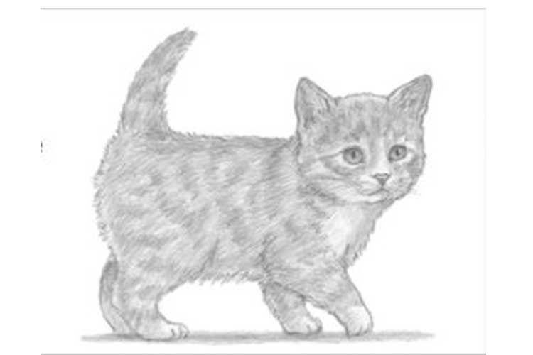 how to draw a baby kitten sketch baby animal drawings animal drawings cat sketch draw to kitten a how baby