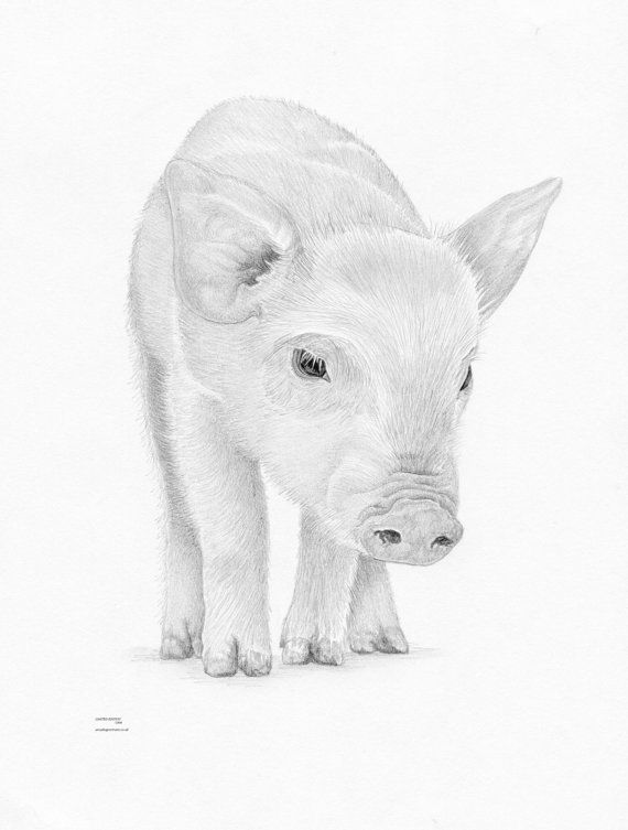 how to draw a baby pig cute pig pencil drawing google search with images baby pig a draw to how