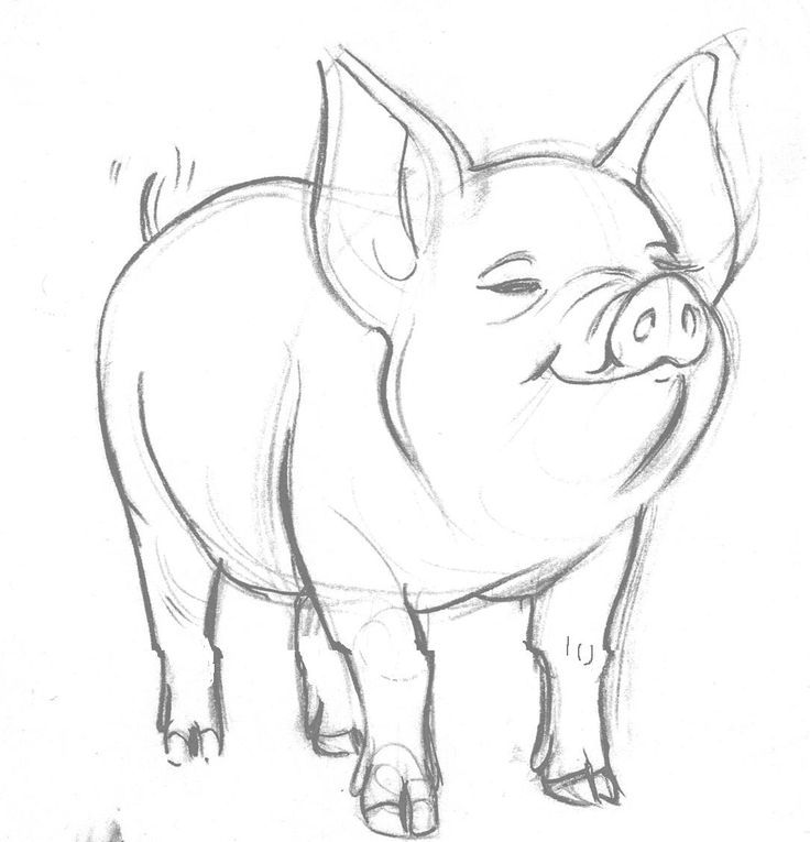 how to draw a baby pig how to draw a baby pig baby pig draw how to a