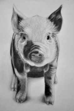 how to draw a baby pig how to draw a pig to pig how baby draw a