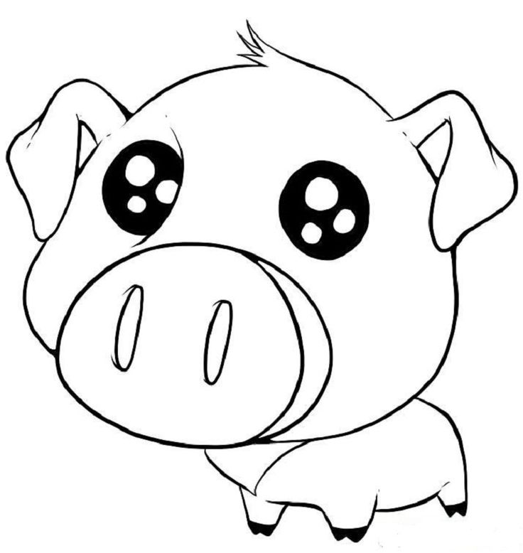 how to draw a baby pig pig drawings google search just cute pinterest baby to a draw how pig