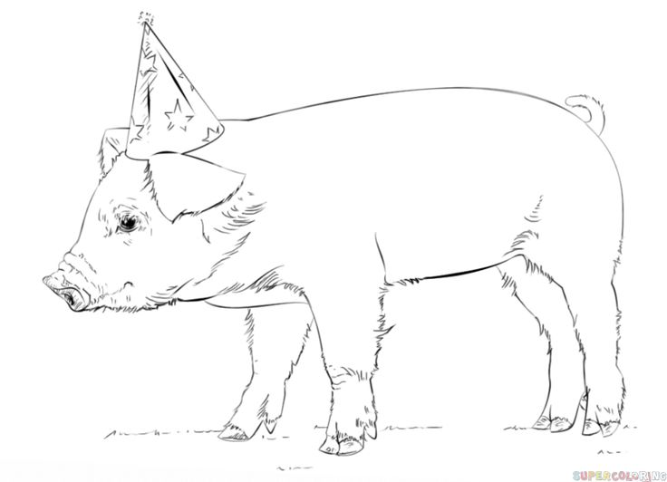 how to draw a baby pig piglet pig limited edition art drawing print by pig to draw baby how a