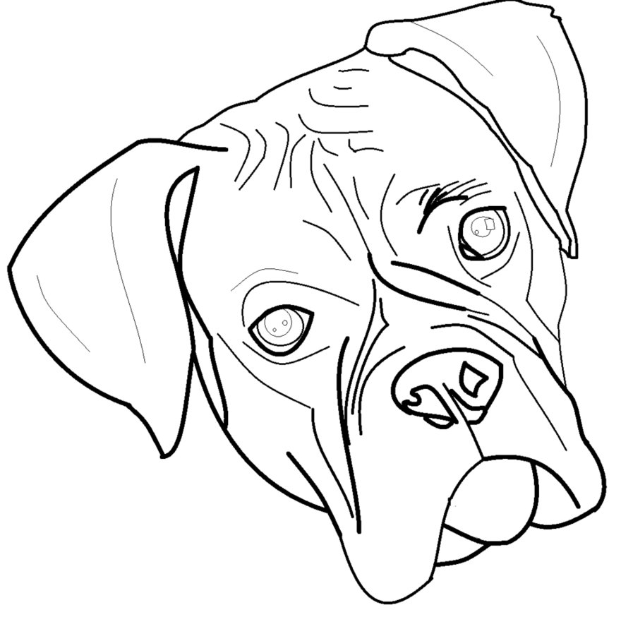 how to draw a boxer step by step boxer puppy drawing at paintingvalleycom explore step step boxer a to how by draw