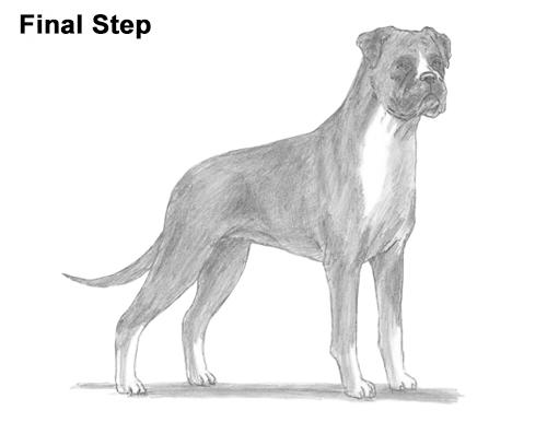 how to draw a boxer step by step how to draw a boxer dog step draw step boxer how a to by