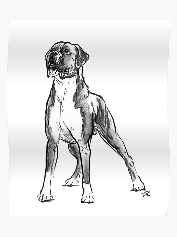 how to draw a boxer step by step how to draw a boxer dog step to how boxer step draw by a
